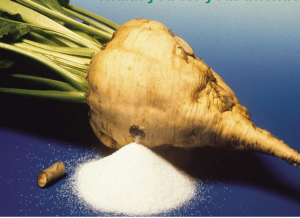 фото сахарная свекла, производство сахара