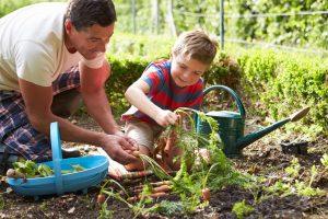 мальчик с папой собирают морковку, фото
