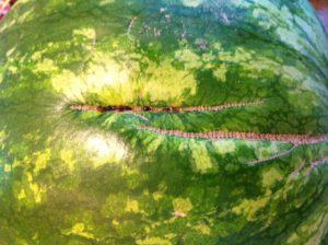 польза арбуза для организма, следы опыления, картинка